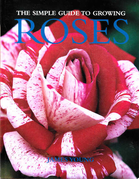 The Simple Guide to Growing Roses